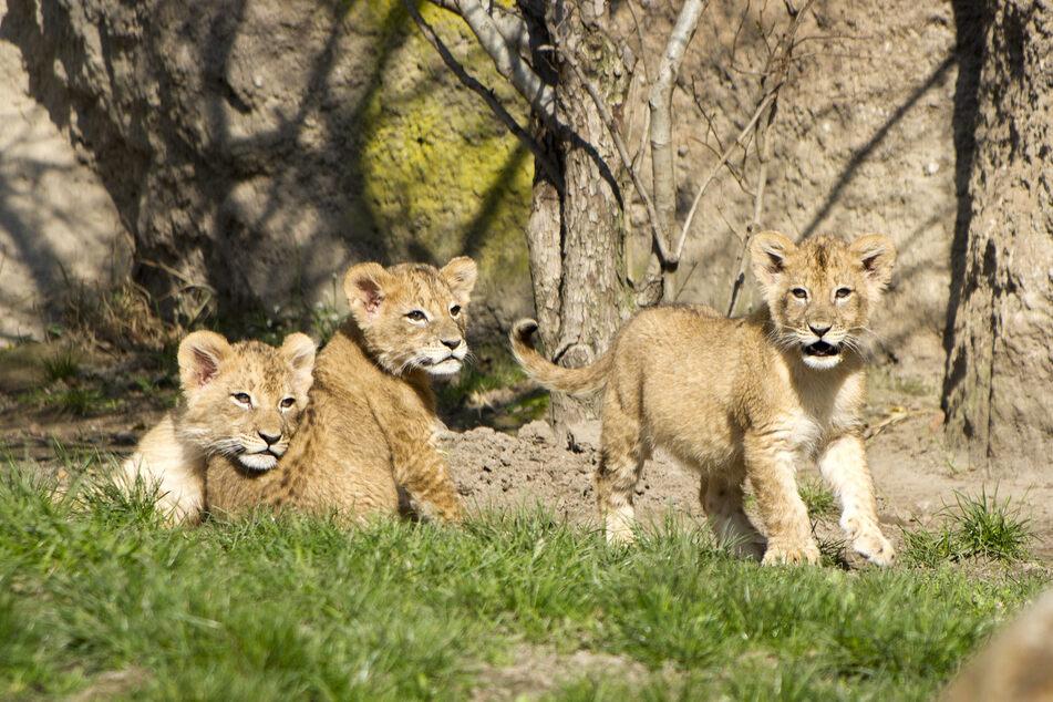 Zahlreiche Besucher strömten nach Wiederöffnung des Zoos in den Tierpark.