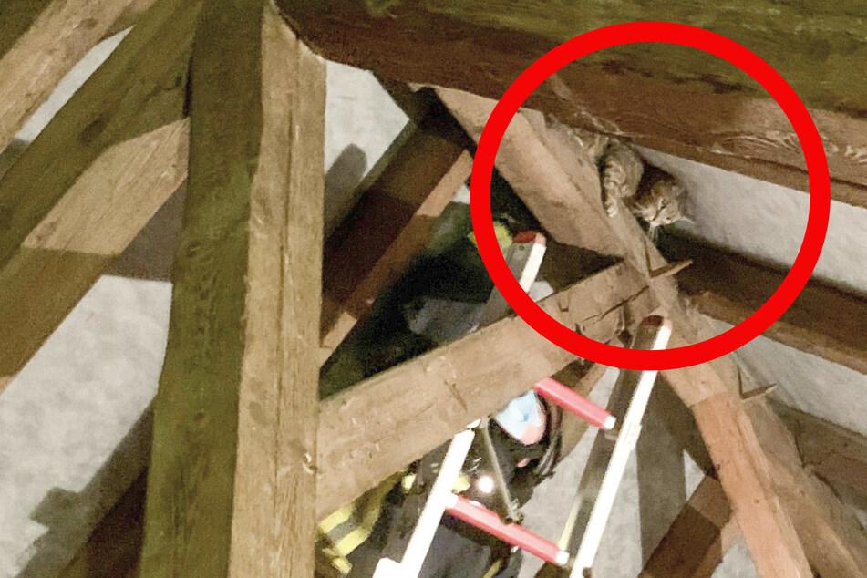 Miez in Nöten: Feuerwehr muss Kater Felix aus Dachstuhl befreien