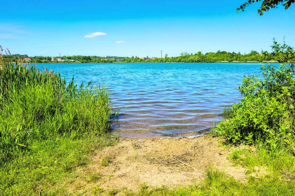 Der Olbersdorfer See ist umgeben von Wiesen und Wäldern.