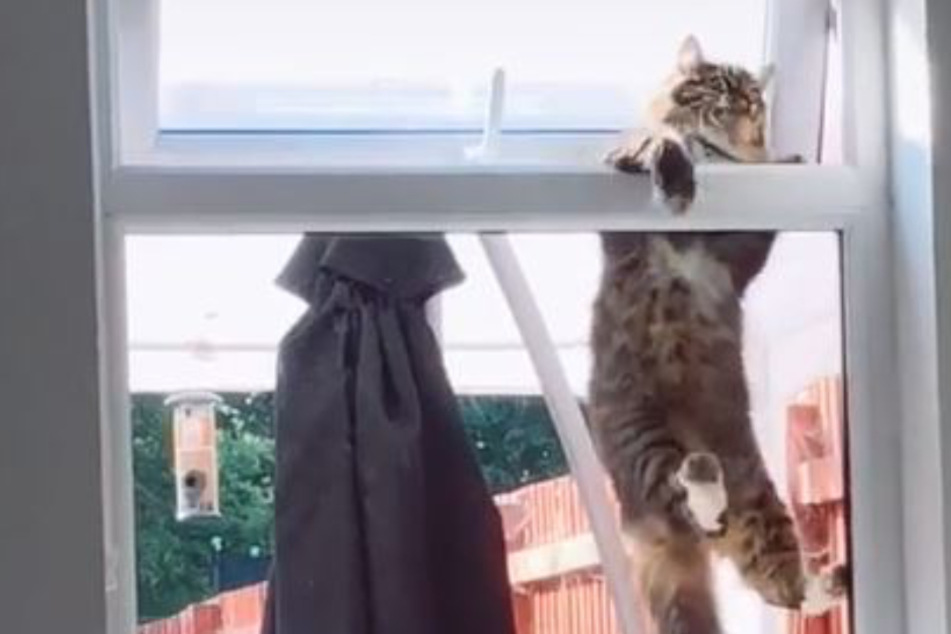 Hang in there: video of world's most determined cat goes viral