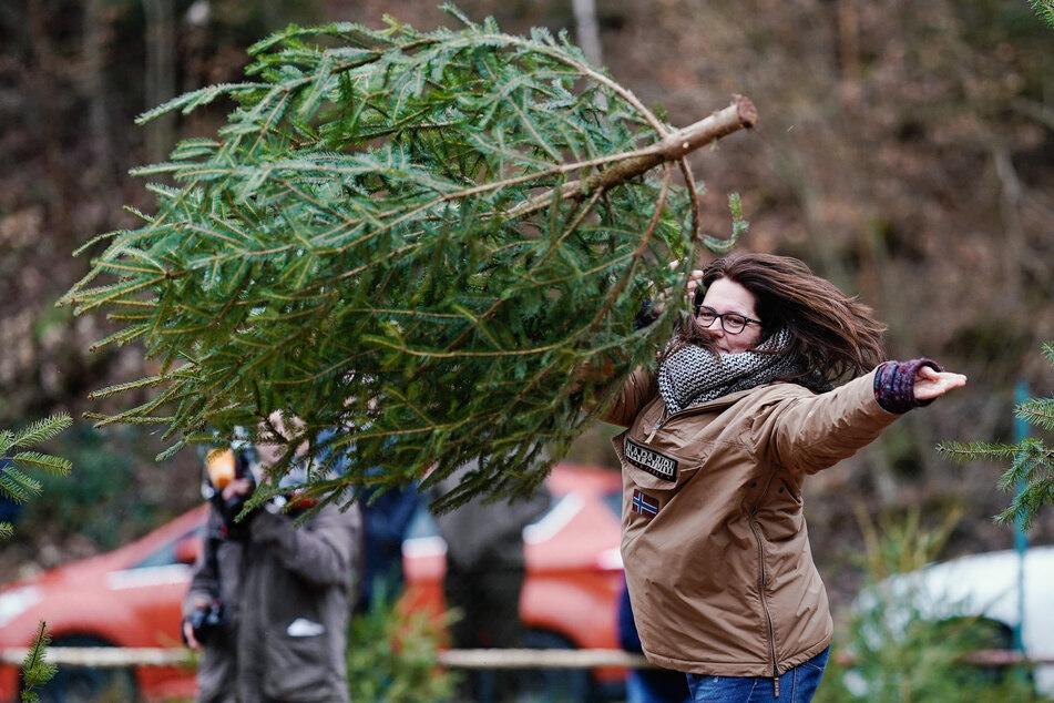 Die Weihnachtsbaumwurf-WM muss diesen Winter ausfallen.
