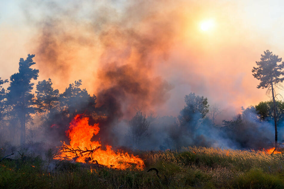 Wildfire season is starting earlier every year in the US (stock image).