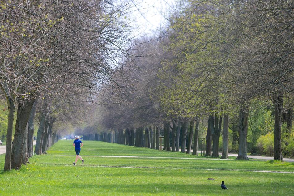 Dresden: Raub im Großen Garten: 20-Jähriger von Fahrrad gestoßen