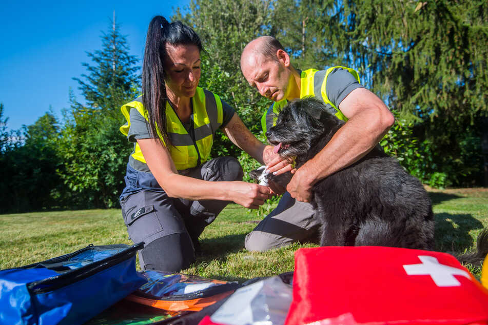 Sandra Kögel (44) und Enrico Lübke vom der Tierrettung Chemnitz legen einem Mischling einen Verband an.