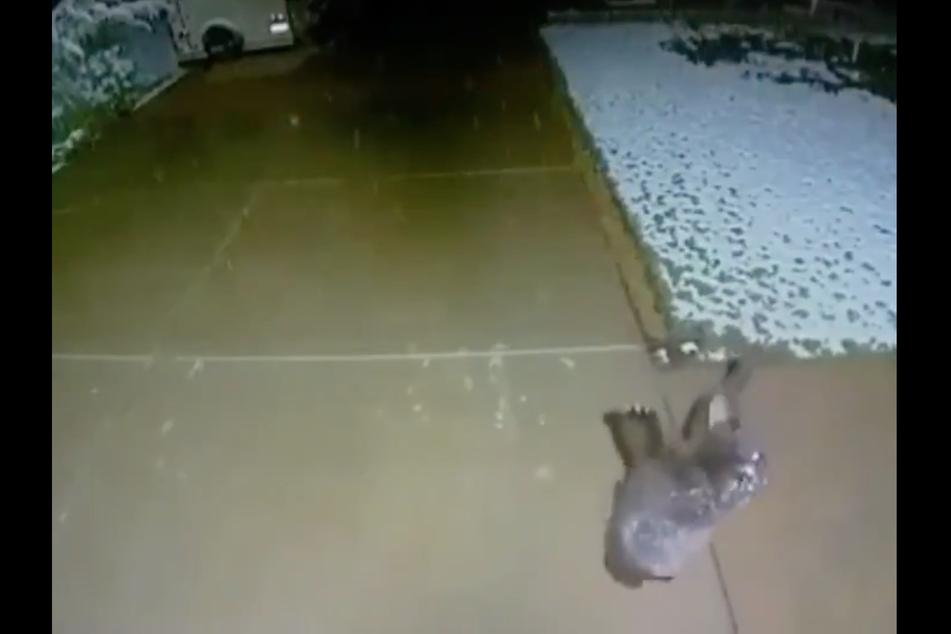 Security camera records adorable bear cub having some winter fun