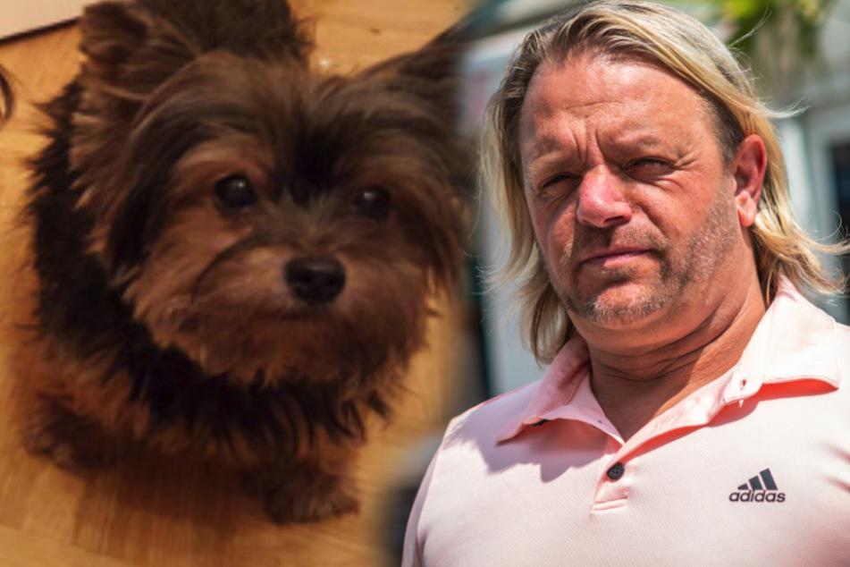 Tierisches Drama am Softeis-Truck: Mann überfährt Hündin Lucy und flüchtet