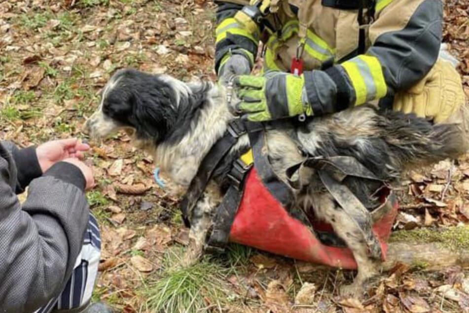 Sie fraß Wildschweine und trank aus Schlammpfützen: Hündin Cleo nach fünf Tagen aus Erdloch gerettet