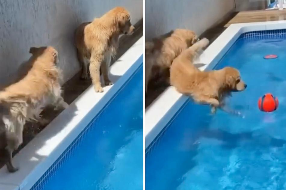 So gehts richtig! Lulu (l) nimmt Anlauf und schubst den mittlerweile großen Matteo in den Pool.