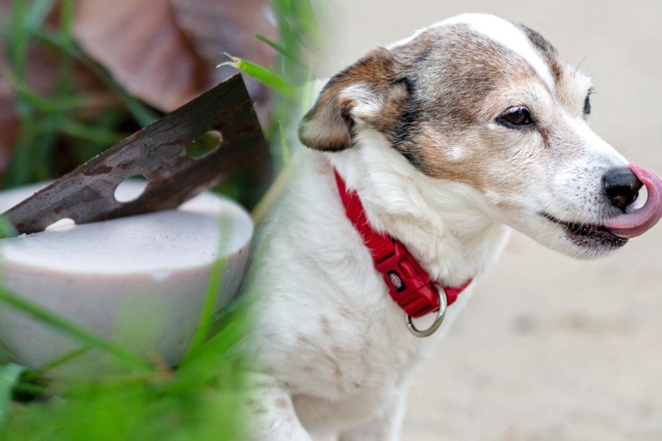 Hundebesitzer aufgepasst: Tierhasser verteilen präparierte Köder