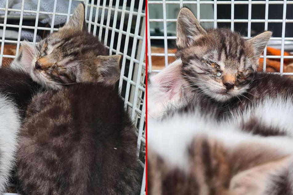 Das Tierheim Delitzsch hat kranke Kitten bei sich aufgenommen, die auf der Straße geboren wurden.