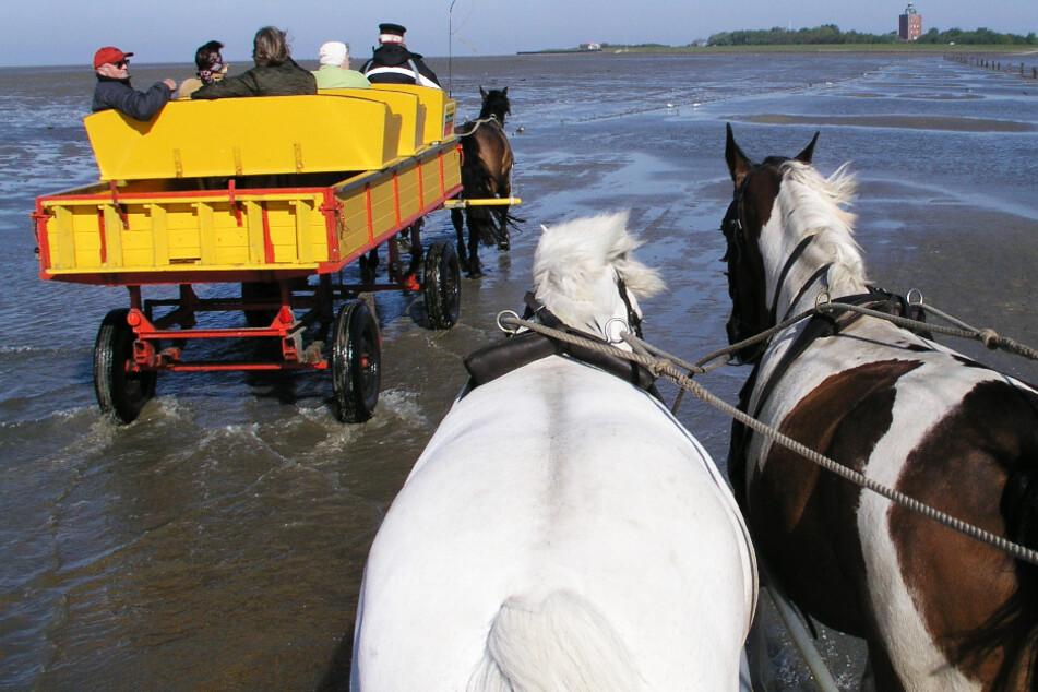Dramatischer Kutschunfall: Drei Menschen verletzt, ein Pferd ertrinkt!