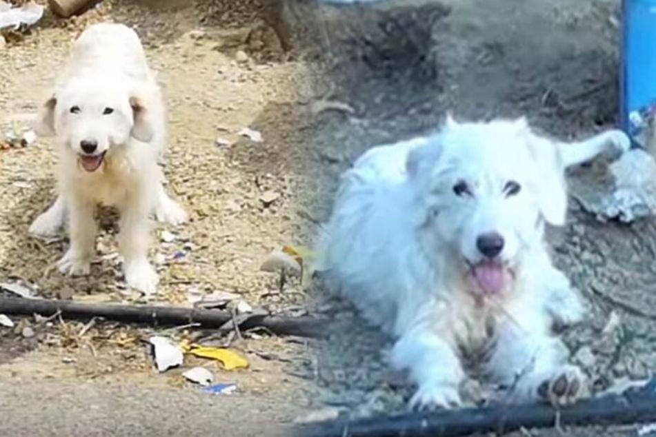 Seit 20 Monaten: Hund will Unfallort seines toten Herrchens nicht verlassen