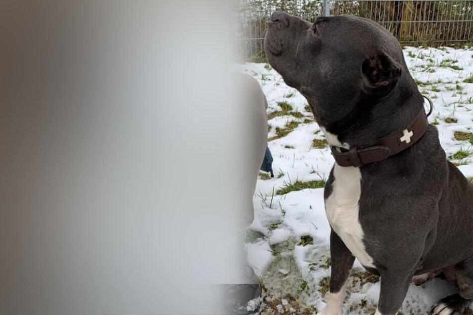 Hund Hektor hat keine Ohren, jetzt hat er einen ganz speziellen Weihnachts-Wunsch
