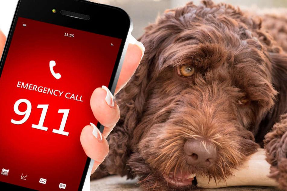 Heldenhafter Hund und Teenager retten Oma das Leben