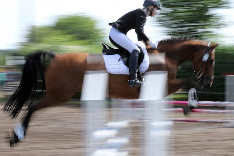 In Frankreich wurde ein Pferd vermutlich zu Tode gequält.