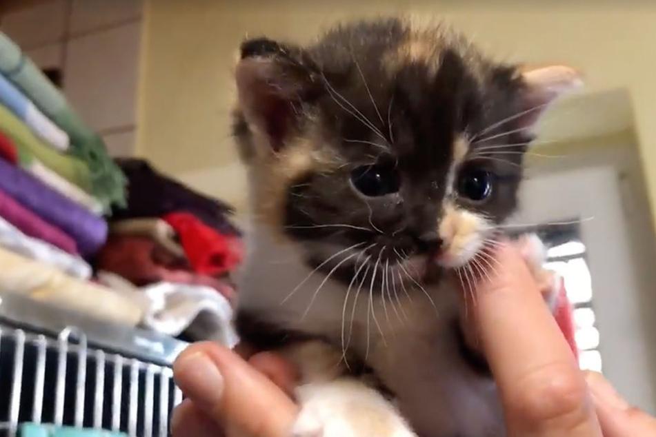 Ausgesetzt! Kätzchen vor Müllpresse gerettet