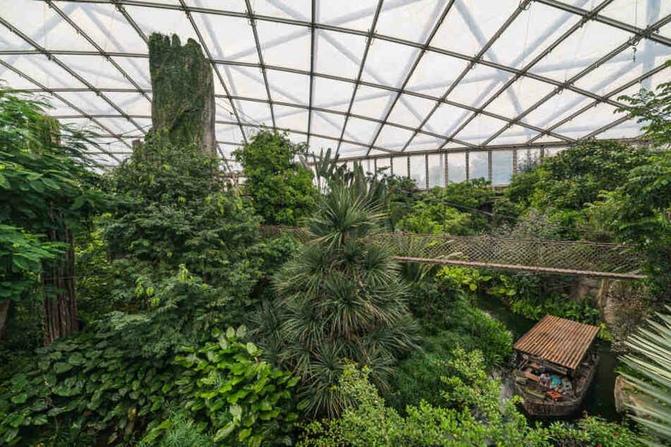 Eintrittspreise für Leipziger Zoo werden 2020 teurer