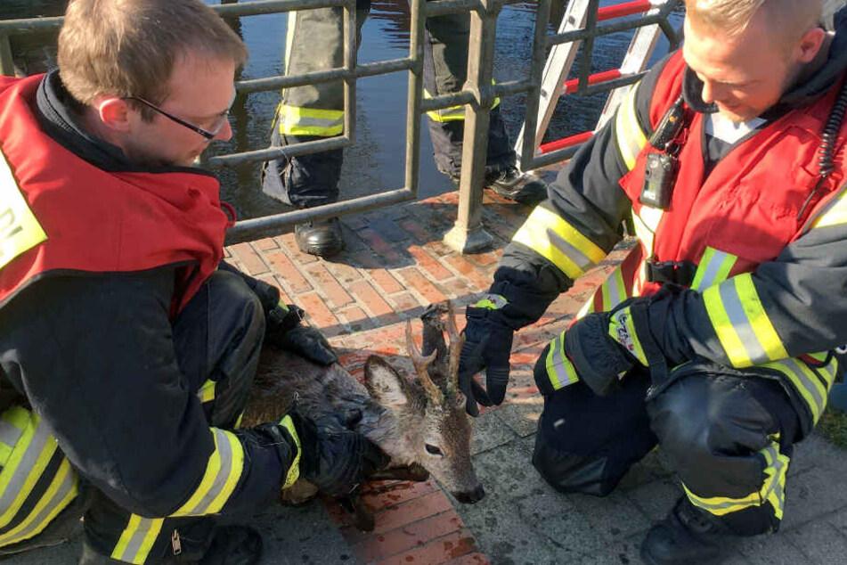 Feuerwehrleute kümmern sich nach der Rettung um den Rehbock.