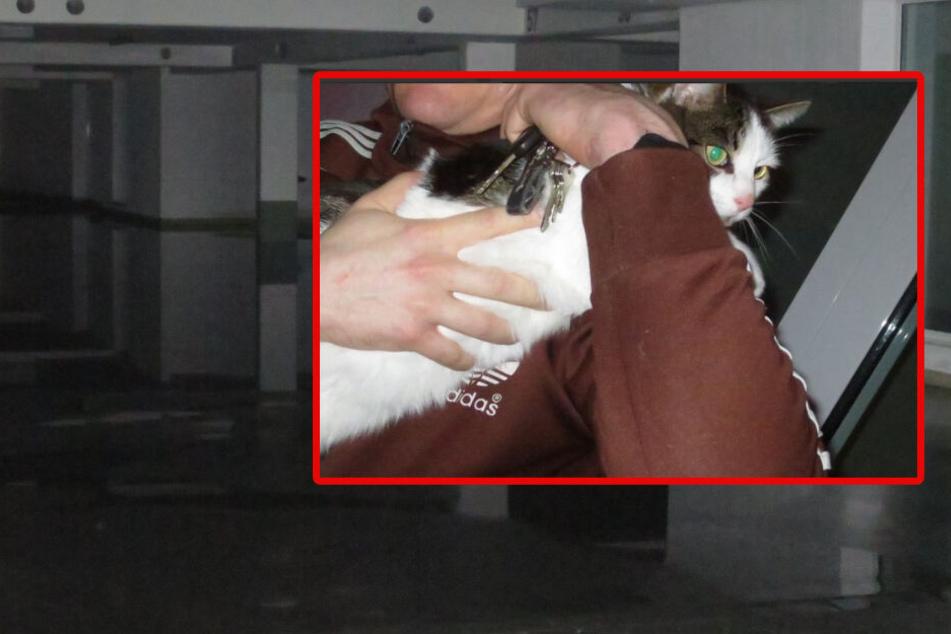 Rohrbruch flutet Wohnungen, Geschäfte und Garage: Feuerwehr rettet Bewohner und Katzen