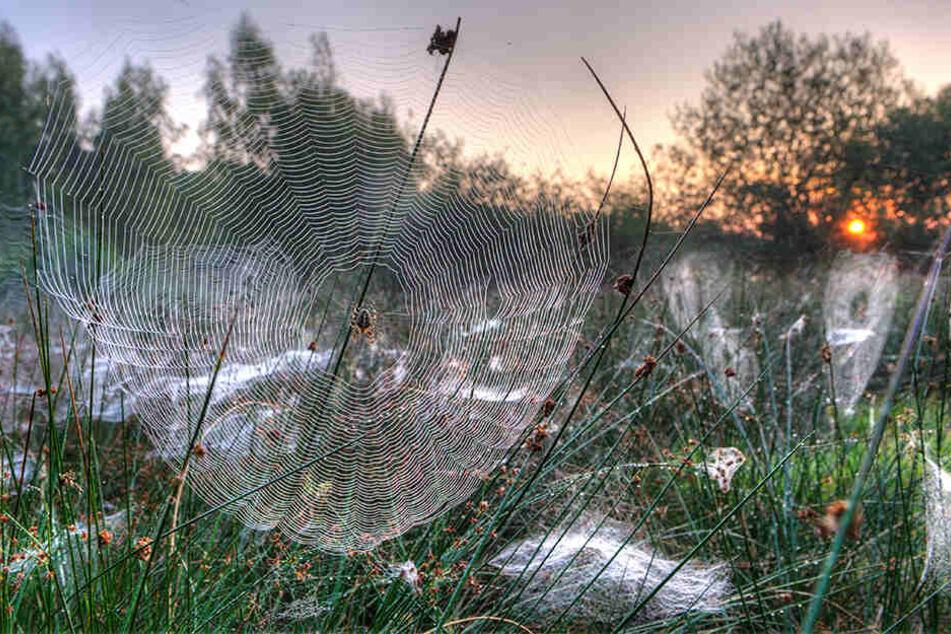 Spinnen greifen an! Grund für Aggressivität ist der Klimawandel