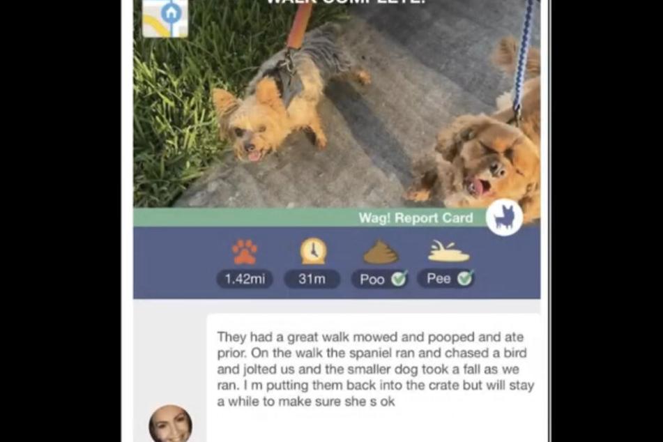 Hundesitterin Hannah schrieb noch diese Nachricht, dann war sie weg.