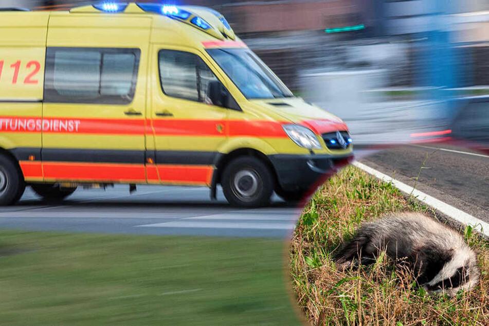 Renault kollidiert mit Dachs: 22-Jährige bei Wildunfall schwer verletzt