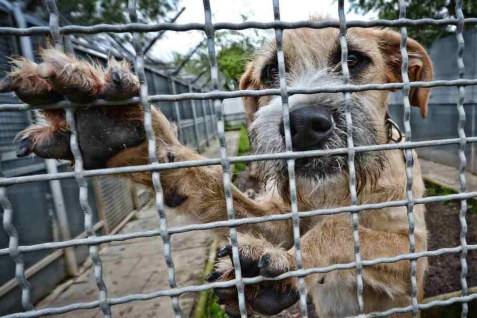 Bei einem vernichtenden Feuer in einem russischenTierheimsind 120 Hunde und zahlreiche Katzen verbrannt (Symbolbild).