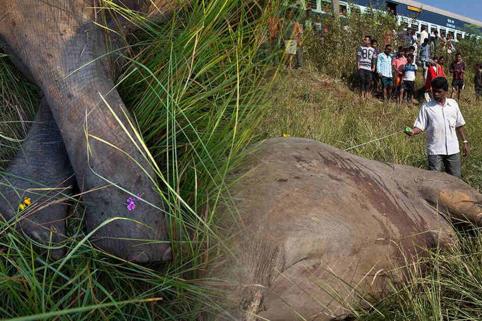 Schrecklich: Warum mussten diese Elefanten sterben?