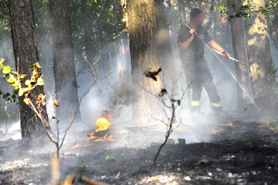 Die Flammen griffen auch auf eine nahes Waldstück über.