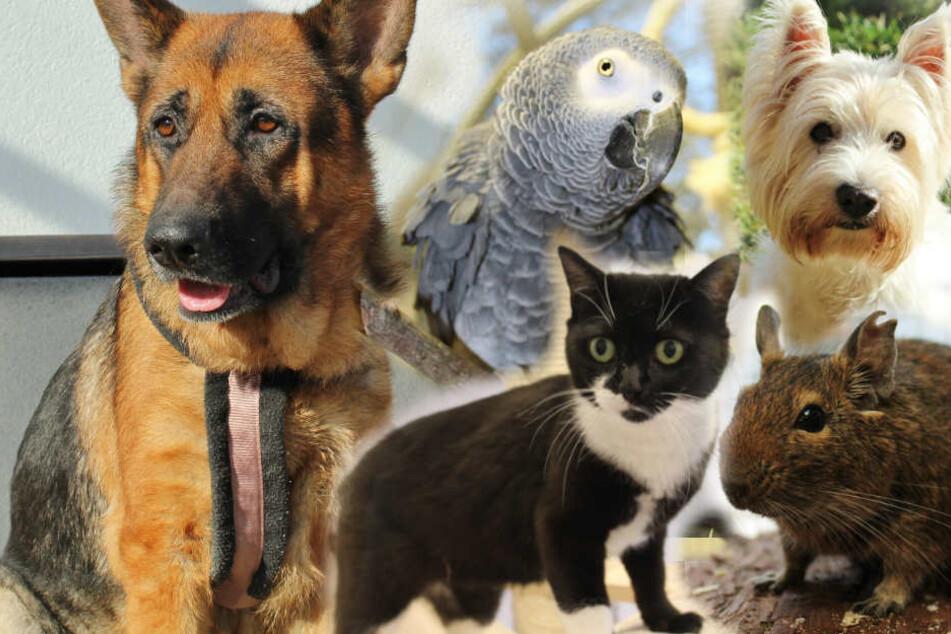 Du kannst diesen Tieren helfen: Ihre Geschichten brechen einem das Herz!