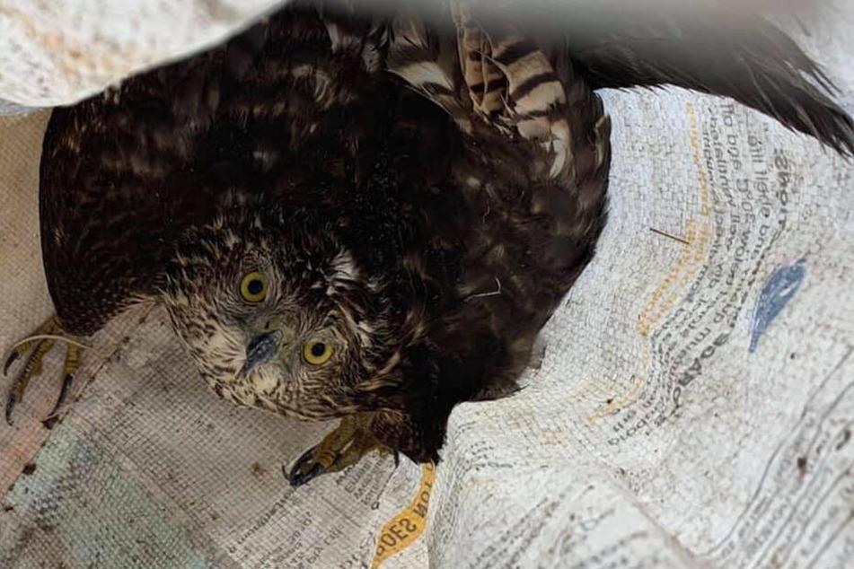 Drinnen hockte ein verängstigter Wildvogel, der unter Tierschutz steht.