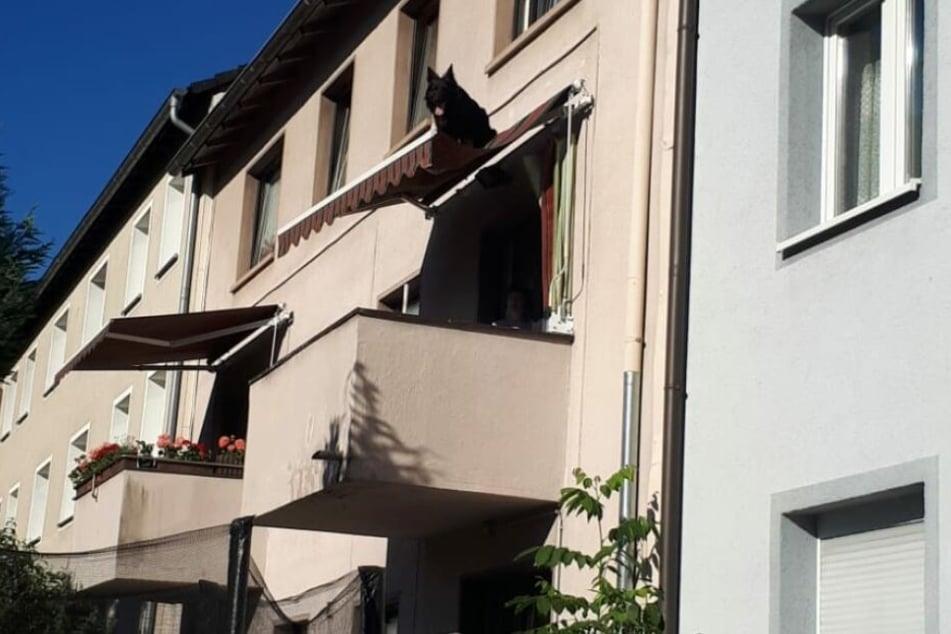 Der Hund hing auf einem Sonnenschutz fest. Er war aus einem Fenster darüber auf das Dach gesprungen.