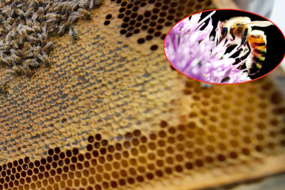 Die intensive Landwirtschaft, der Einsatz von Pestiziden und die Lichtverschmutzung seien die Ursache für das große Insektensterben.