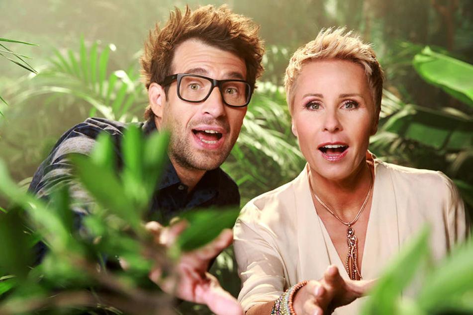 Daniel Hartwich und Sonja Zietlow moderieren auch 2019 den Dschungel.