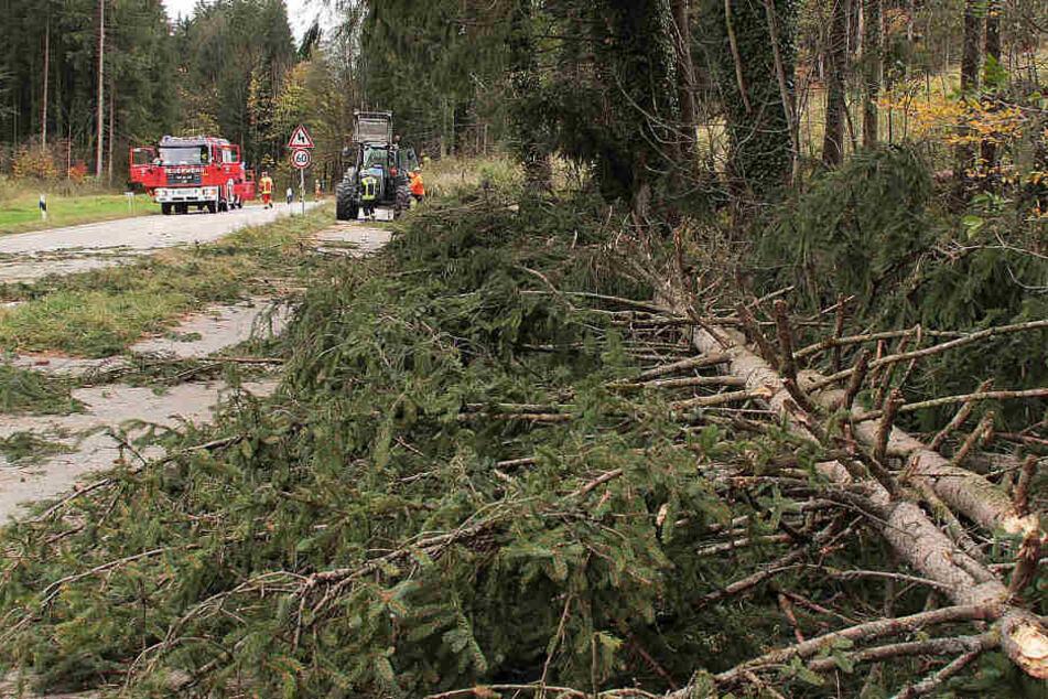 """Sturm """"Herwart"""" hat in Baden-Württemberg nicht so schlimm gewütet wie in anderen Teilen Deutschlands (im Bild: Arbeiten nahe Rohrdorf in Bayern)."""