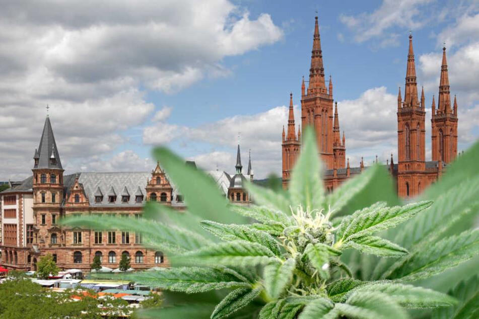 In Wiesbaden könnte es bald einen Cannabis-Club geben. (Fotomontage)