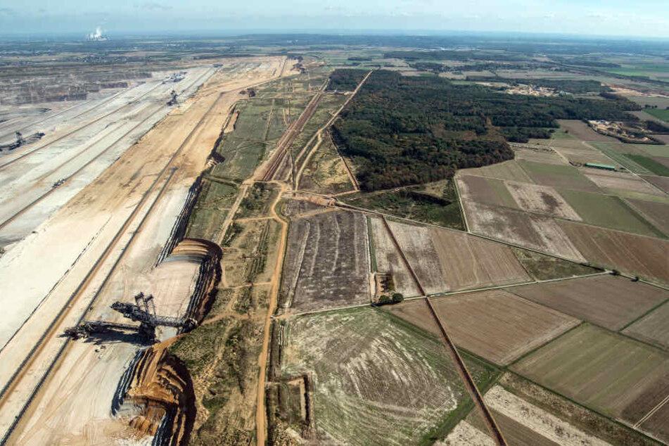 Der Tagebau Hambach und der verbliebene Rest des Hambacher Forstes am Rand.