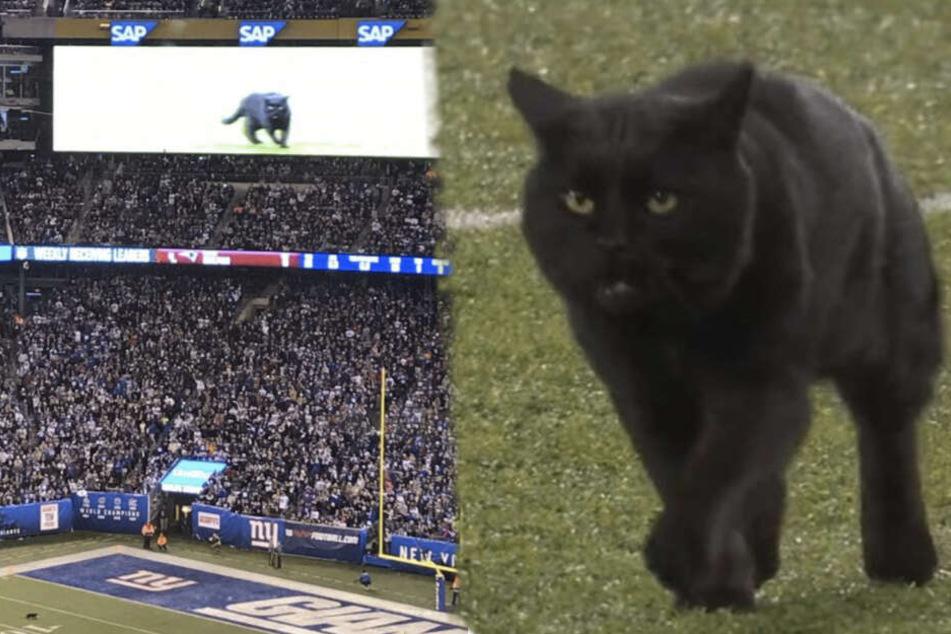 Schwarze Katze rennt übers Spielfeld und die Sportfans rasten raus