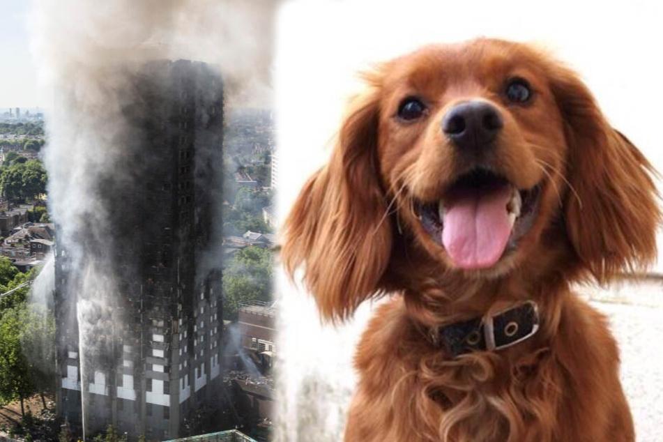 Hund, der im Londoner Hochhaus die Polizei unterstützte, ist tot