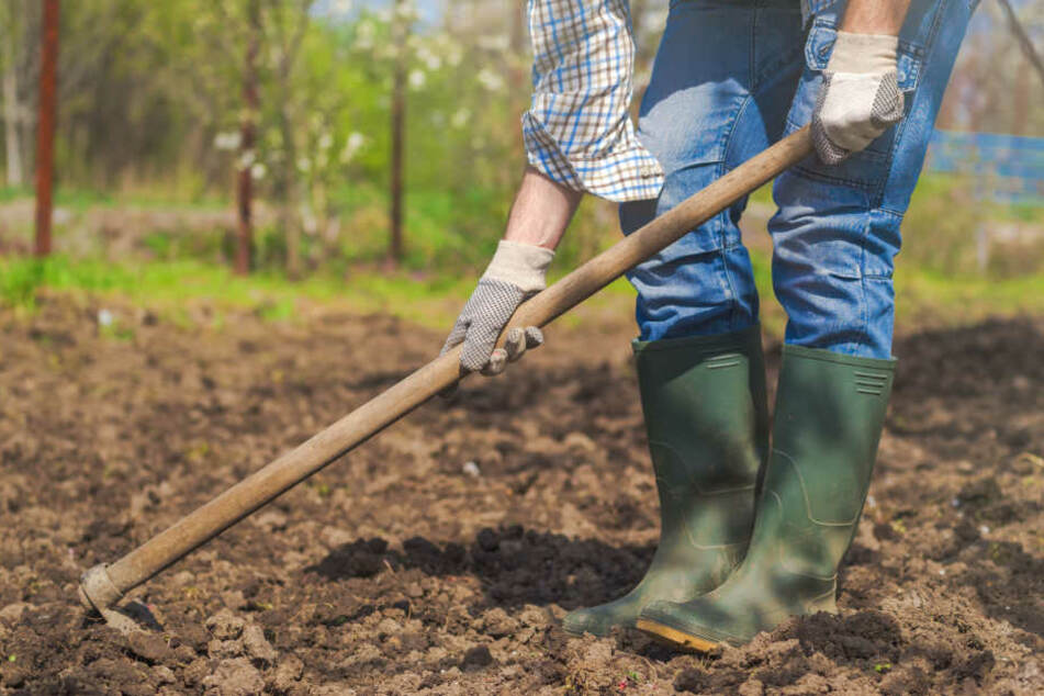 Bei der Gartenarbeit ging der 50-Jährige auf seinen Nachbarn los. (Symbolbild)