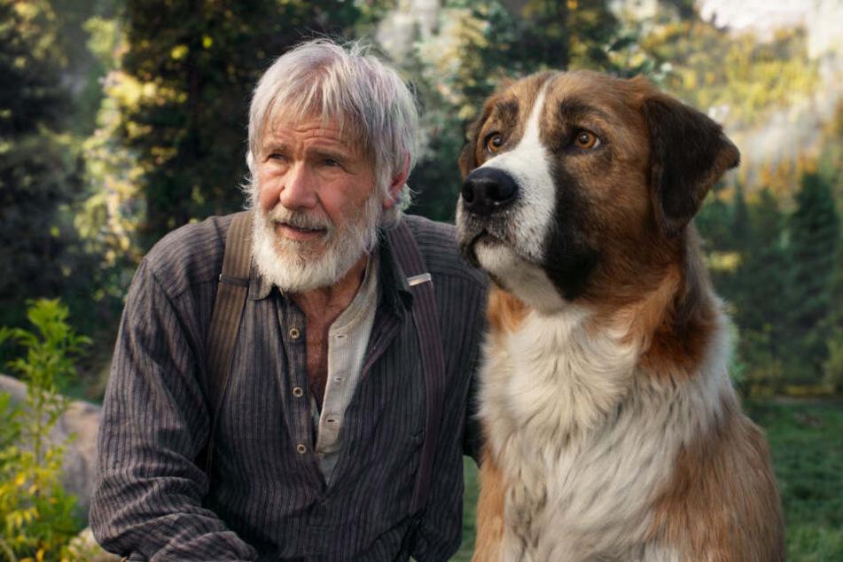 John Thornton (Harrison Ford) und Buck werden echte Freunde, die füreinander einstehen.