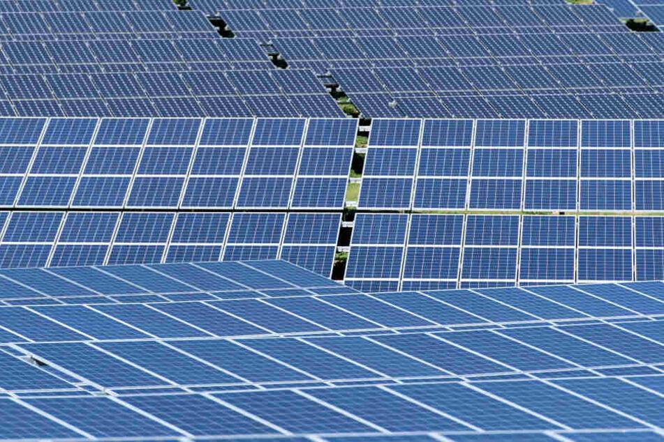 200 Solarmodule im Wert von etwa 14.000 Euro sind gestohlen worden (Symbolbild).