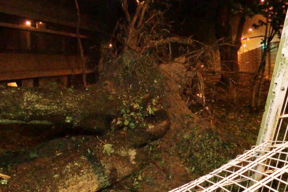 Zahlreiche Bäume wurden vom Unwetter entwurzelt.