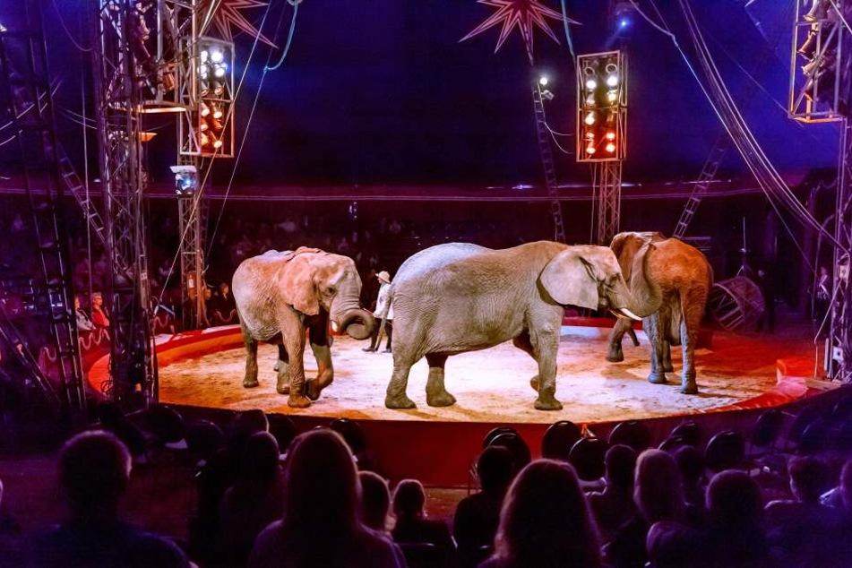 Solche Auftritte mit Elefanten im Zirkus sollte es künftig eigentlich nicht mehr geben.