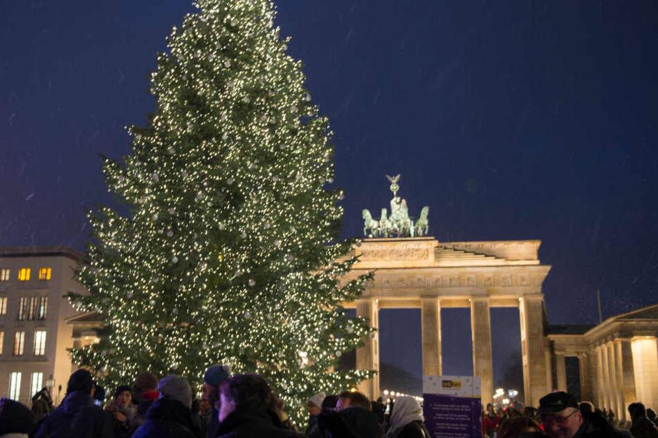 So viele Lämpchen schmücken den Berliner Weihnachtsbaum aus Thüringen