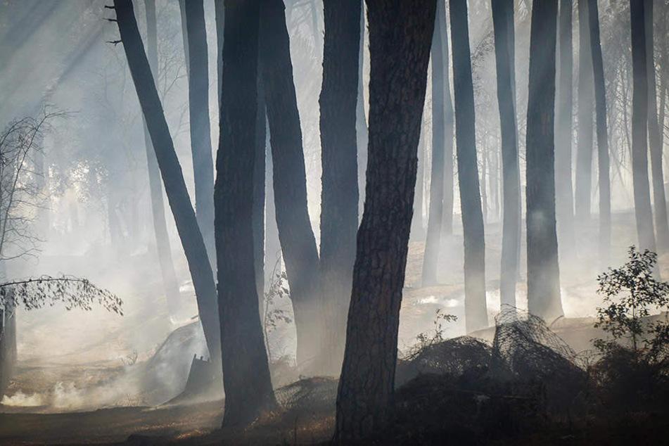 Während einer schweren Hitzewelle sind in vielen Teilen Italiens Waldbrände ausgebrochen.