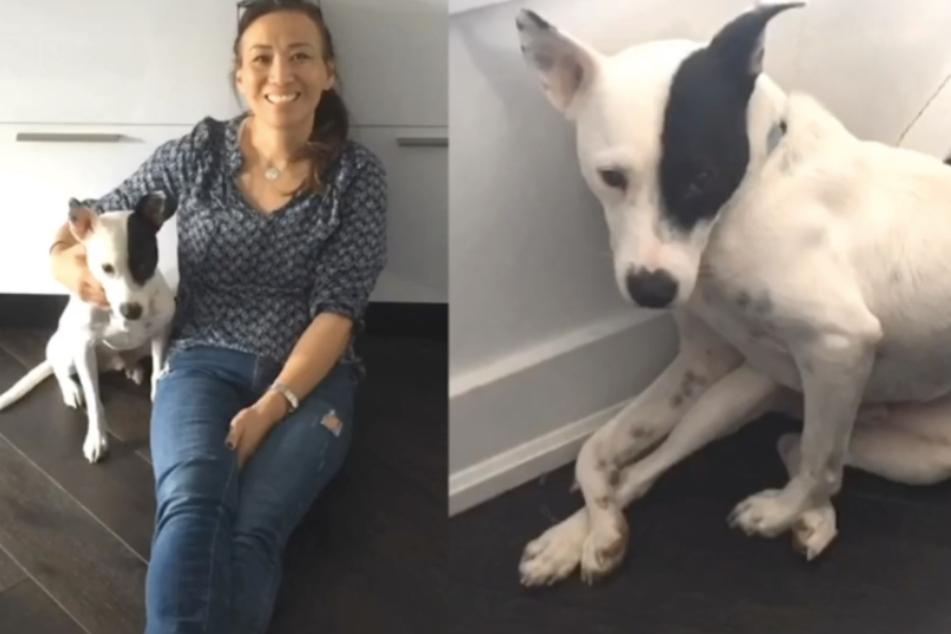 Frau hat panische Angst vor Hunden, dann trifft sie auf besonderen Vierbeiner