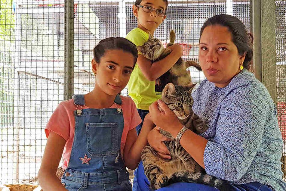 Verbannte Katzen treten in den Hungerstreik
