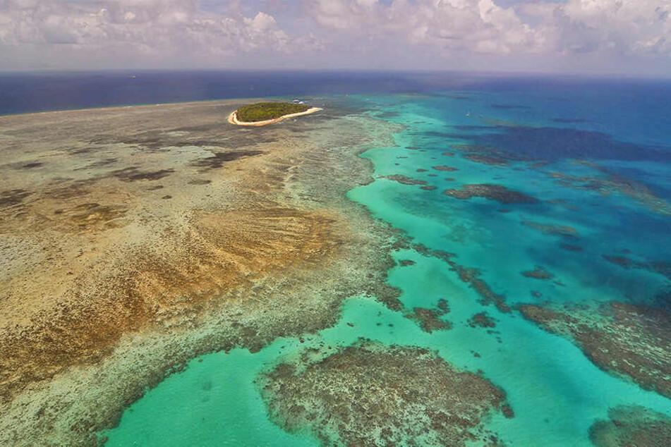 Dem Great Barrier Reef vor Australien geht es nicht gut. Die Unesco will das Gebiet nun für gefährdet erklären.