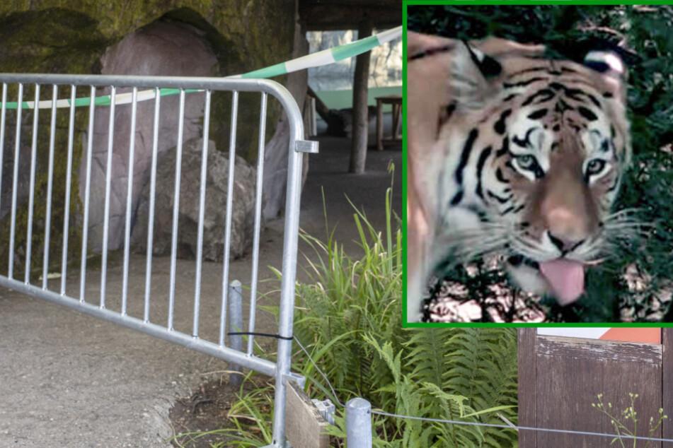Pflegerin vor Zoo-Besuchern von Tiger getötet: Was passiert jetzt mit Irina?